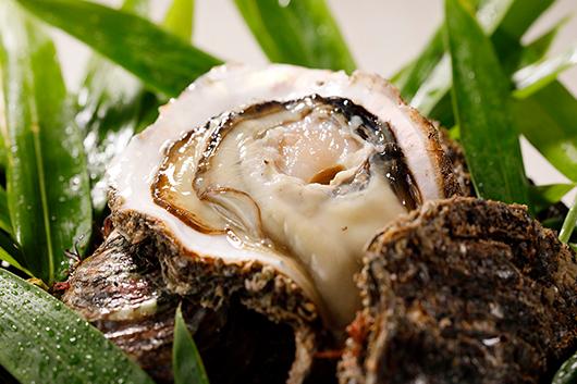 夏の恵みを存分に楽しめる岩牡蠣&鮎の塩焼きと冷酒のショートコース